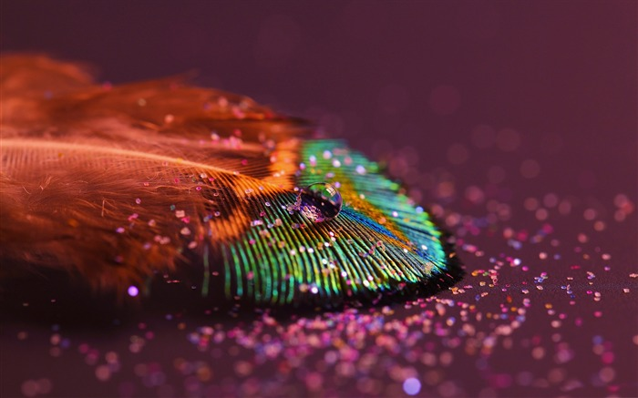 Peacock feathers-Macro photography HD Wallpaper Views:4337