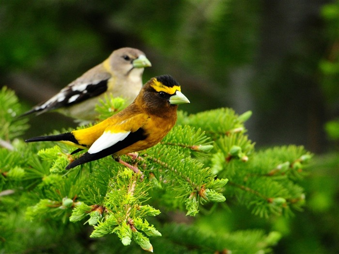 birds couple branch-Animal HD photo wallpaper Views:4235