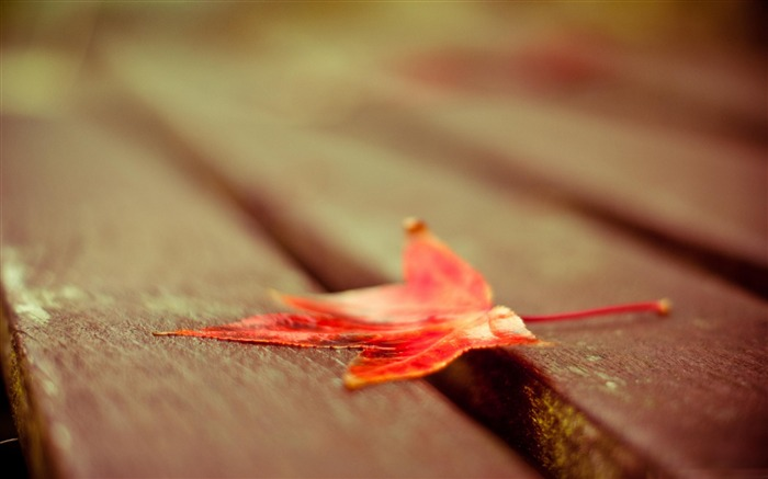 red leaf down-Macro photography HD Wallpaper Views:4174
