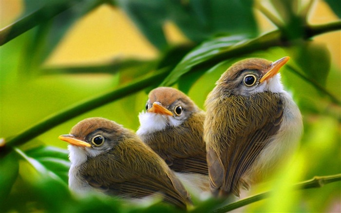 three bird branch-Animal HD photo wallpaper Views:7834