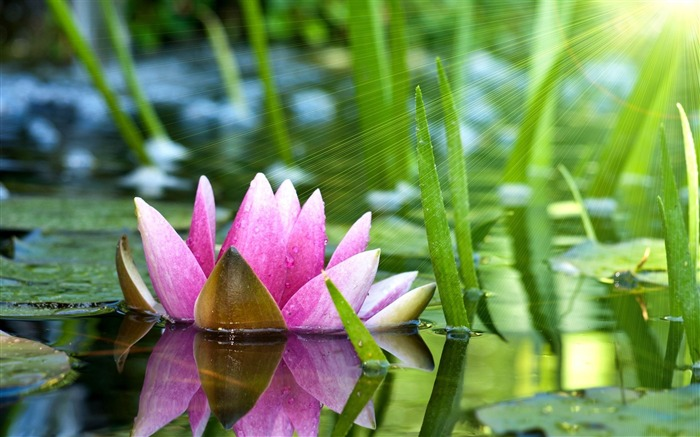 water lily lotus-Flower Photos Wallpaper Views:3666