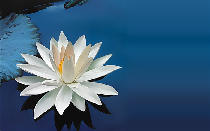 water lily white-Flower Photos Wallpaper Views:2109