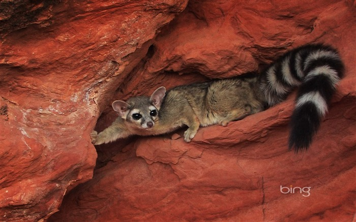 Cave animals-August 2013 Bing wallpaper Views:3604