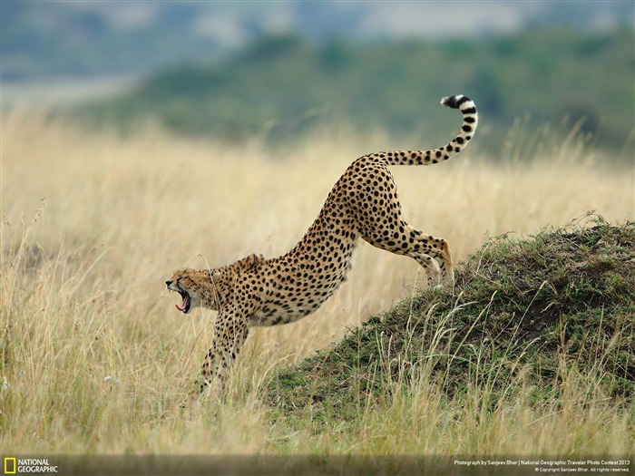 Ready for action-National Geographic Wallpaper Views:4633