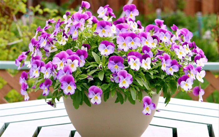 pansies flowers pots table-Photos HD Wallpaper Views:5585 Date:8/11/2013 7:09:15 PM