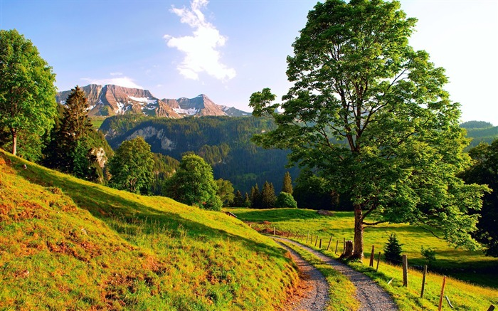 sunny mountain path-landscape HD Wallpaper Views:9216