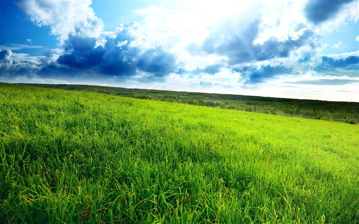 superb green field-landscape HD Wallpaper Views:3247