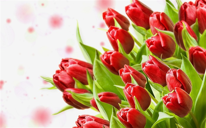 tulips flowers-Photos HD Wallpaper Views:4739 Date:8/11/2013 7:16:18 PM