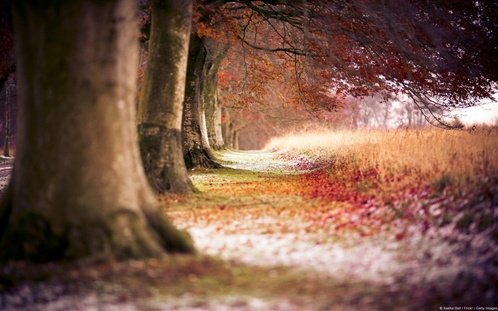 Beech trees and foliage-Nature HD wallpaper Views:4021 Date:9/7/2013 3:52:26 PM