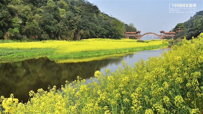 Bridges strong spring bloom-China National Geographic wallpaper Views:6458 Date:9/17/2013 10:35:56 PM