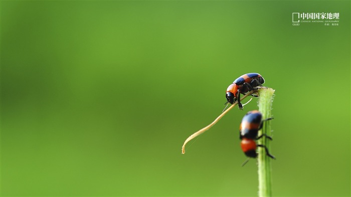 Insects language-China National Geographic wallpaper Views:2866 Date:9/17/2013 10:48:53 PM