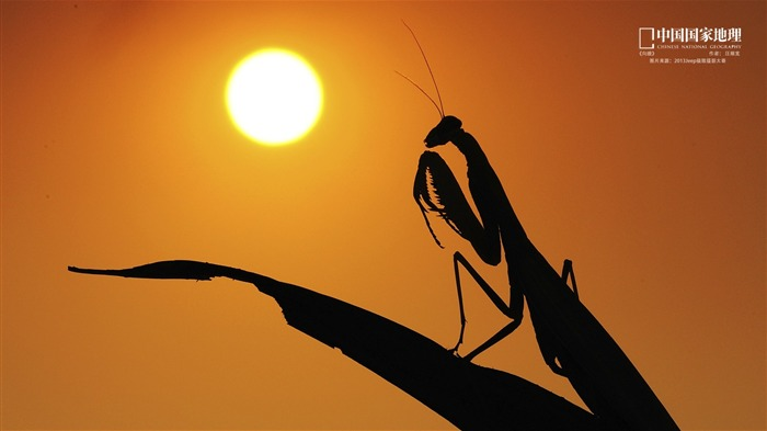Mantis Sunset-China National Geographic wallpaper Views:4121 Date:9/17/2013 11:14:19 PM