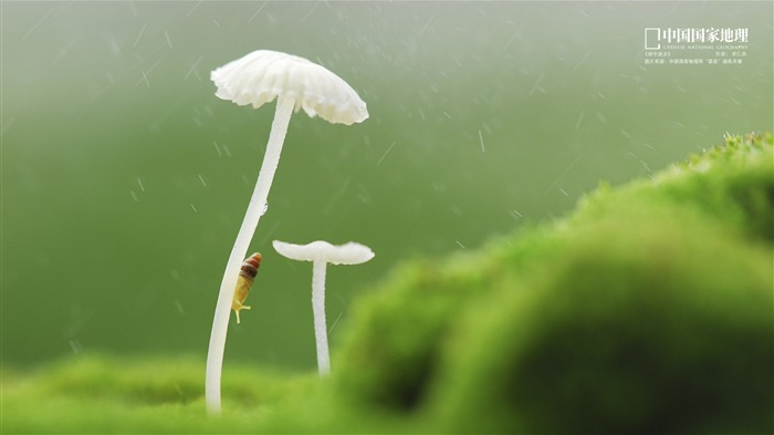 Walking in the rain-China National Geographic wallpaper Views:3257 Date:9/17/2013 11:18:02 PM