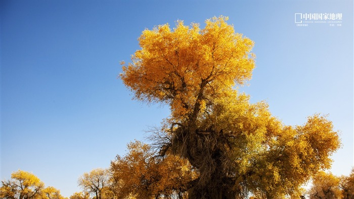 Wonderful Populus-China National Geographic wallpaper Views:2800 Date:9/17/2013 10:38:35 PM