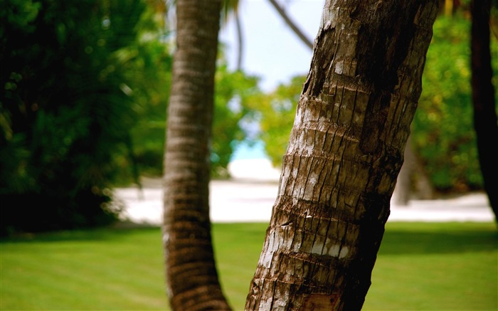 beach tree trunk-Photography Life HD Wallpaper Views:3942