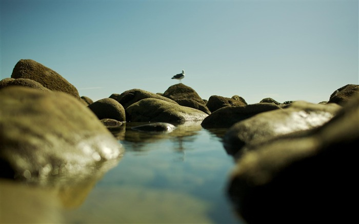 seagull on the rocks-Photography Life HD Wallpaper Views:2231