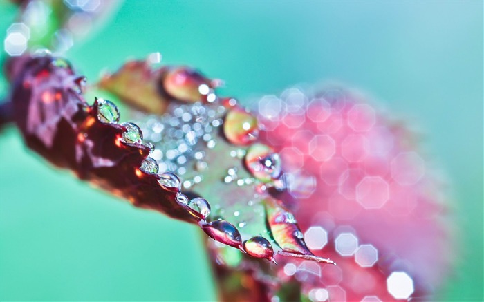 wet purple leaf bokeh-Photography Life HD Wallpaper Views:2230