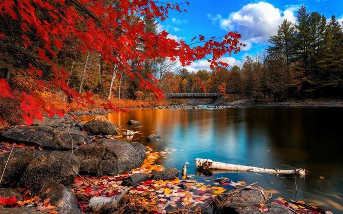 Autumn forest lake-Scenery HD wallpaper Views:4314