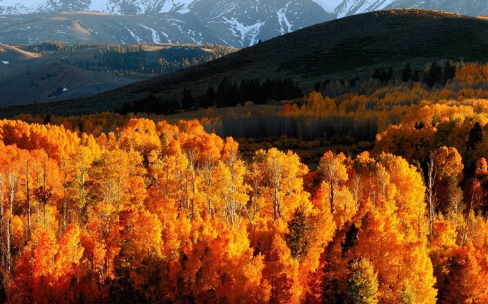 Autumn trees gold mountains-Landscape HD Wallpaper Views:3875