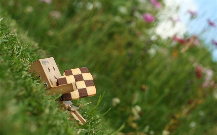 Lying in the grass-Danbo Photography Wallpaper Views:3599