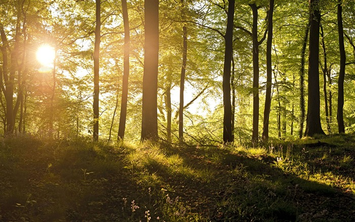 Wild woods Sunrise-Windows Nature Wallpaper Views:5108