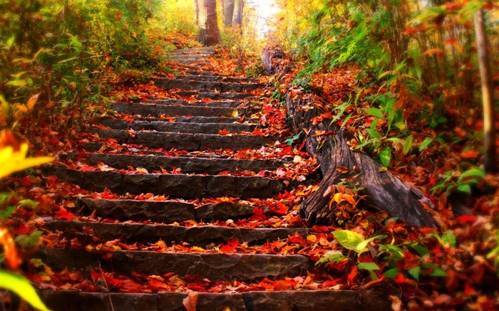 foliage covered steps-Scenery HD wallpaper Views:5571