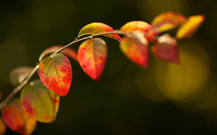 leaves plant branch-Plants Macro wallpaper Views:3778 Date:10/11/2013 11:14:32 AM