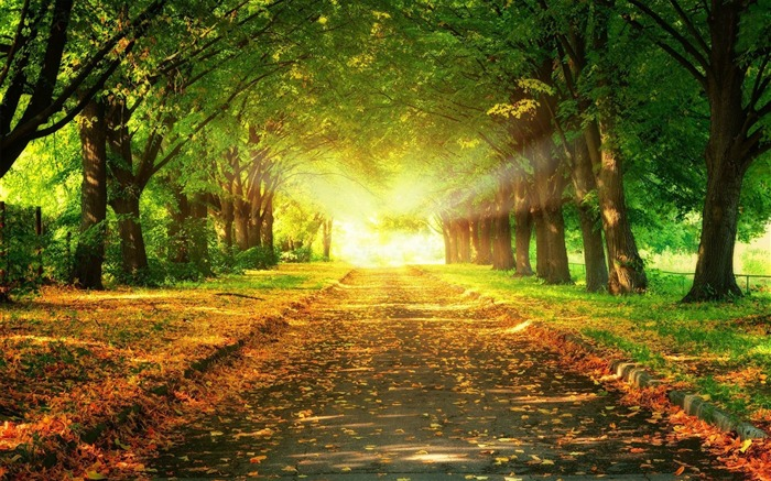 light at the end of the road-Scenery HD wallpaper Views:5336