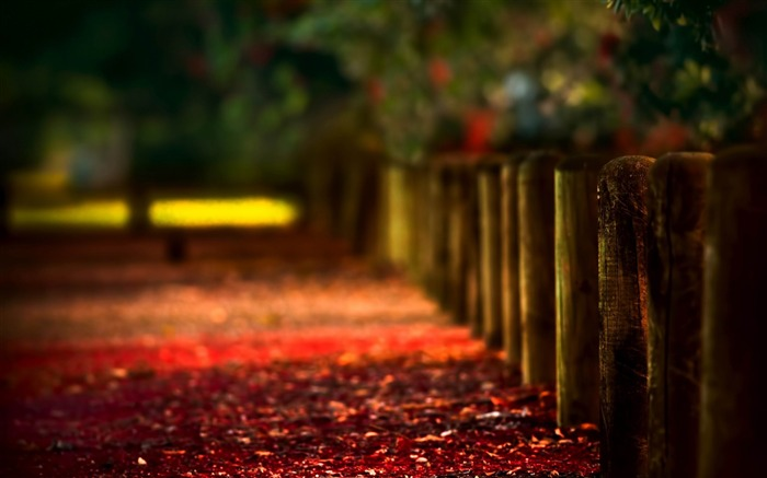 logs stakes protection-Autumn HD Wallpaper Views:5953 Date:10/31/2013 8:54:00 AM