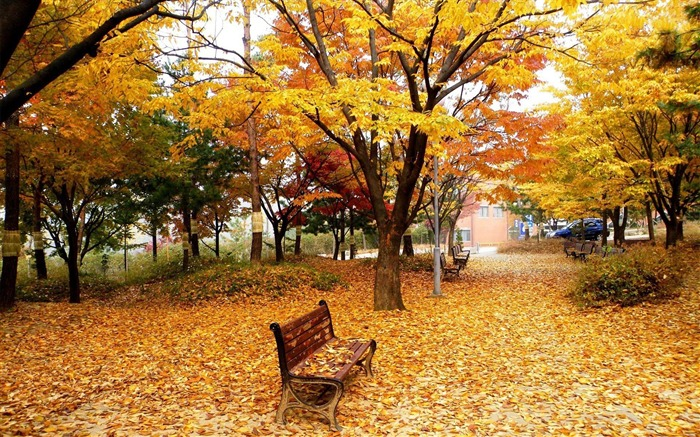 Classic golden autumn scenery HD wallpaper Views:18419
