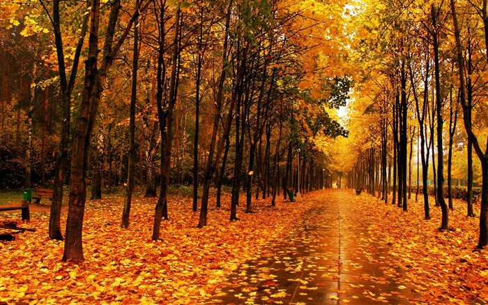 Autumn beautiful Nature scenery wallpaper Views:17650