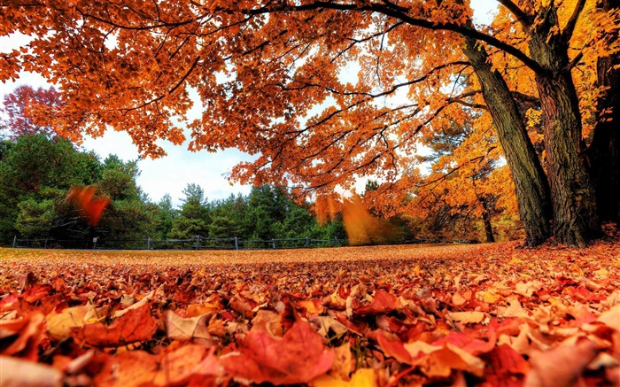 red autumn leaves-Scenery HD wallpapers Views:2631