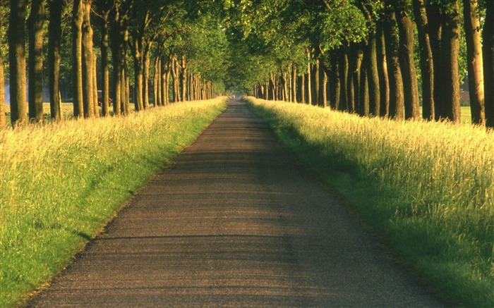 tree alley-Landscape HD Wallpapers Views:3938
