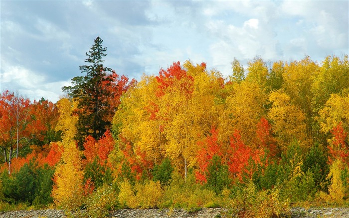 trees colors variety-Autumn HD Wallpaper Views:5203 Date:10/31/2013 9:01:07 AM