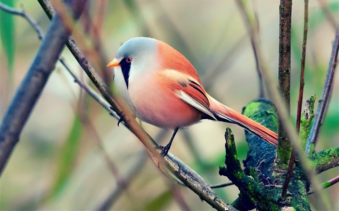 bird pretty sit color-Animal photo Wallpaper Views:3395