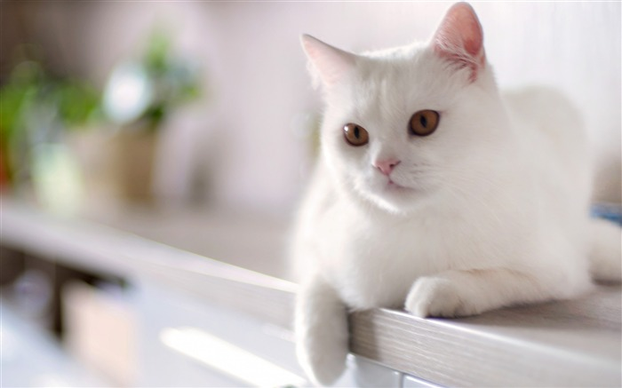 cat white sitting kitty-Animal photo Wallpaper Views:7992