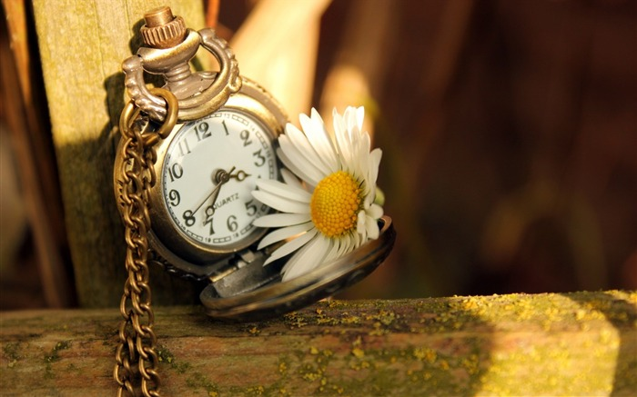 clock time daisy flower-plants desktop wallpaper Views:3325