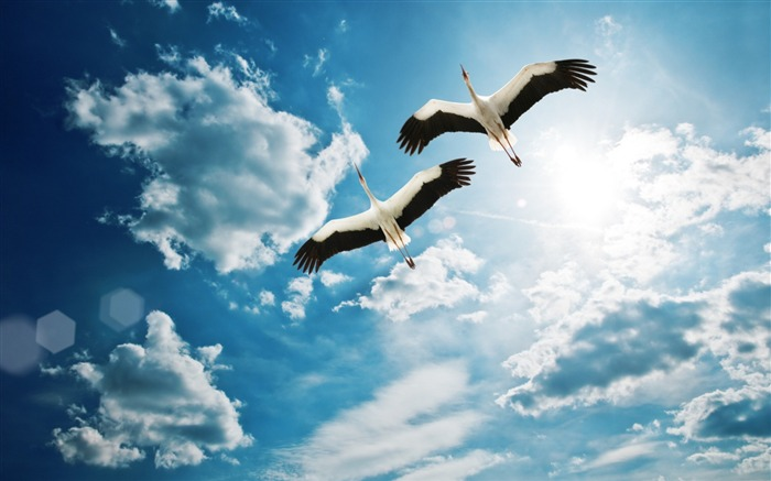 cranes birds flying sky-Animal photo Wallpaper Views:3365