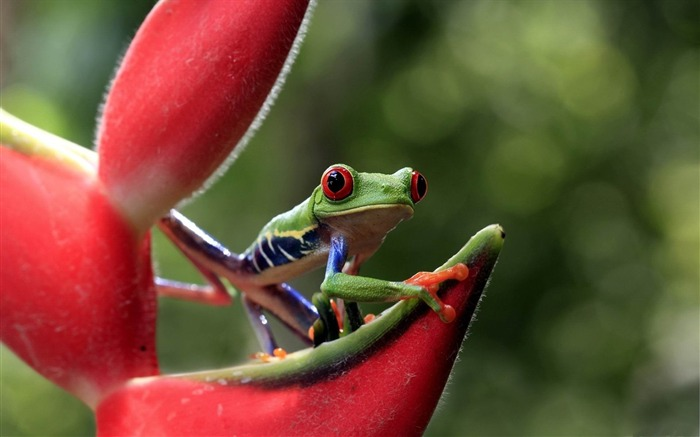 frog eyes flower-Animal Photo Wallpaper Views:3213