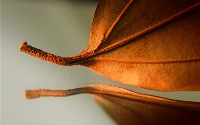 leaf autumn dry close-up-Plants HD Wallpapers Views:2727