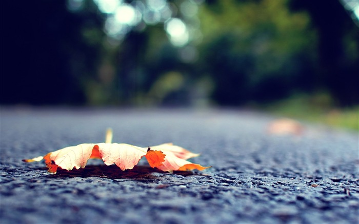 leaf fall fallen surface road-Plants HD Wallpapers Views:2033