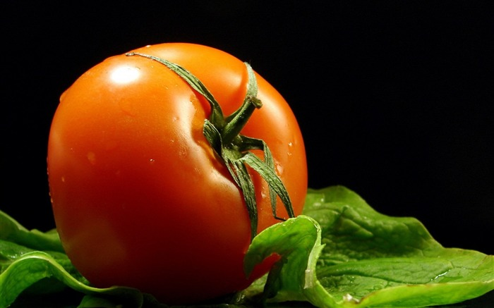 tomato branches drops-Food HD Wallpaper Views:2834