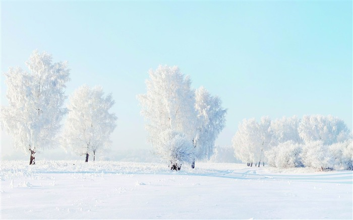 trees frost snow winter-Nature HD Wallpapers Views:8413 Date:11/14/2013 9:24:23 AM