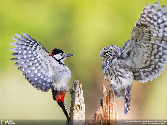 Standoff-National Geographic Wallpapers Views:3452