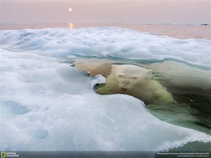 The Ice Bear-National Geographic Wallpapers Views:2379