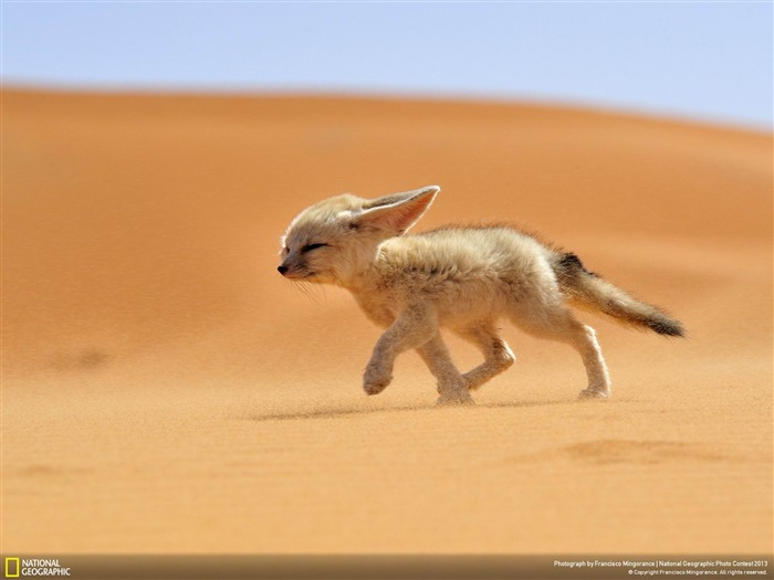 The soul of the desert-National Geographic Wallpapers Views:2409