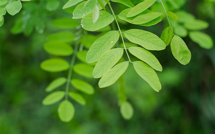 branch leaves macro-photography HD wallpaper Views:4816 Date:12/10/2013 7:25:01 AM