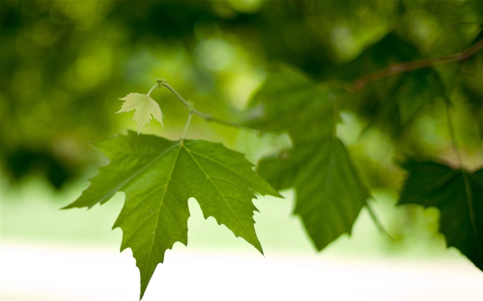 branch leaves spring green macro-photography HD wallpaper Views:3926 Date:12/10/2013 7:25:28 AM