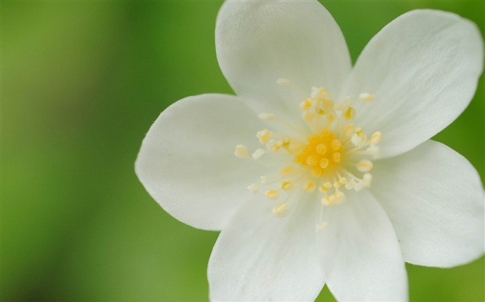 flower petals white plant-photography HD wallpaper Views:4114 Date:12/10/2013 7:28:17 AM