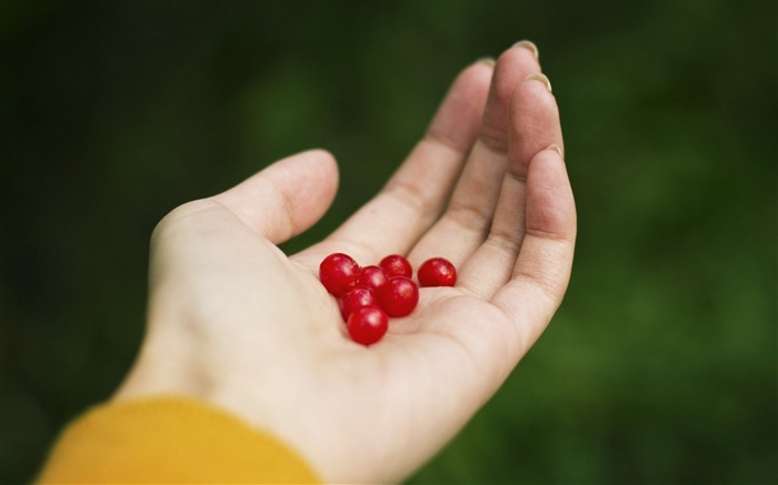 hand berries red girl-HIGH Quality Wallpaper Views:2571